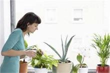 गर्मियों में ऐसे करें Indoor Plants की देखभाल
