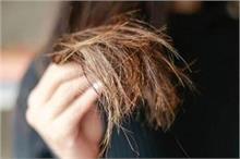 दो-मुंहें बालों की छुट्टी करेंगी किचन की 4 चीजें, नहीं...