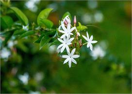Vastu Tips: घर के लिए शुभ माने जाते हैं ये 5 पेड़-पौधे