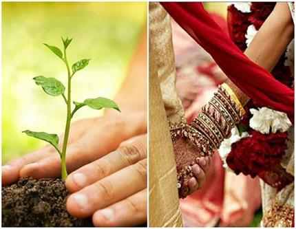 पैसे नहीं, दूल्हे ने शगुन में लिए 21 पौधे, पर्यावरण को बचाने की अनोखी...