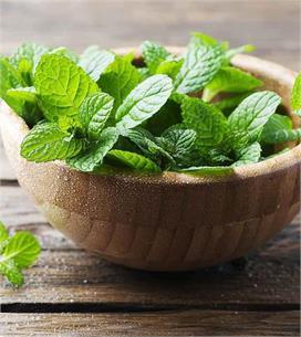 Health Tips: फैटी लीवर का रामबाण ईलाज हैं ये हरी पत्तियां