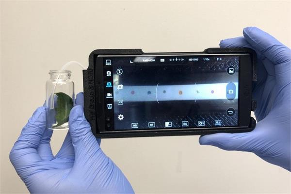 अब पौधों बीमारियों की पहचान करेगा स्मार्टफोन