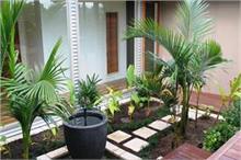 बहुत शुभ माने जाते हैं ये 9 पौधे, घर में बनाए रखते हैं बरकत