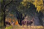 हिल स्टेशन नहीं, इस बार करें इन 4 जंगल की सफारी, एडवेंचर्स के लिए...