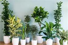 अन्न-धन की नहीं होगी कमी अगर घर में लगाएंगे ये 6 पौधें