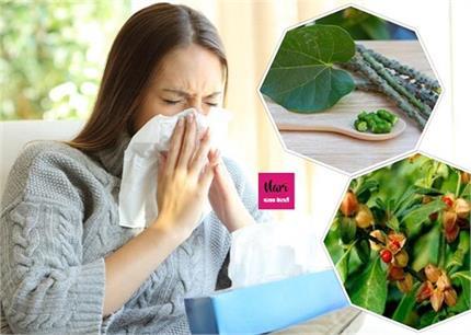 Health Advice: कोरोना काल में अमृत समान ये 4 औषधियां, खा लीं तो नहीं...