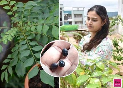 Gardening Tips: घर पर उगाए करी पत्ते से बढ़ाएं भोजन का स्वाद