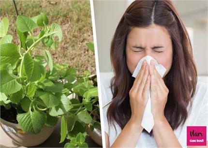 अजवाइन की पत्तियों में छिपा है सेहत का खजाना, शरीर की 8 समस्या होगी...