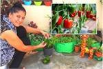 Gardening Tips: छत या बालकनी पर कैसे उगाए शिमला मिर्च
