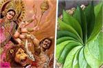नवरात्रि के दिनों में पान पत्तों से जुड़े ये उपाय जरूर करें, घर में...
