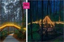 दिल जीत लेगा पेड़ों पर पीली रोशनी में जगमगाता यह पुल, देखिए...