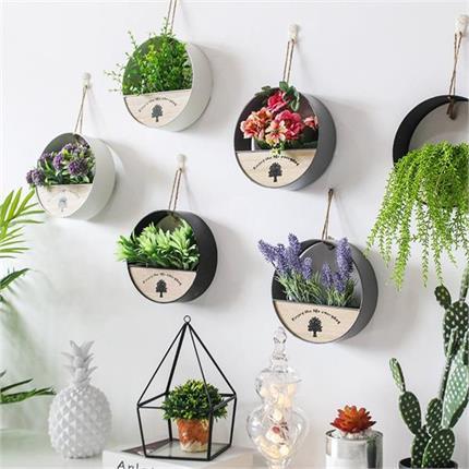दीवारों की रौनक बढ़ाएंगे ये Hanging Plants, हर समय ताजगी और मिलेगी...