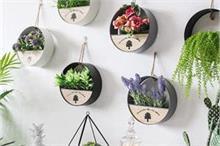दीवारों की रौनक बढ़ाएंगे ये Hanging Plants, हर समय ताजगी और...