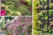 कम स्पेस में भी घर की खूबसूरती बढ़ाएंगे Vertical Plants