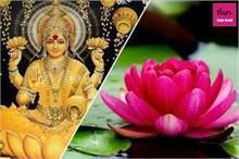 Diwali 2020: इसलिए चढ़ाया जाता है देवी लक्ष्मी को कमल का फूल