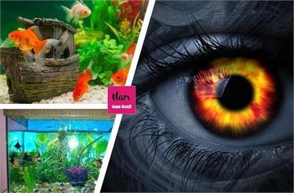एक्वेरियम में जरूर रखें इस रंग की मछली, घर पर नहीं रहेगा बुरा साया!