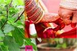 Tulsi Vivah 2020: पति-पत्नी में नहीं बनती तो तुलसी विवाह पर करें ये...
