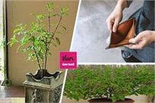 मुसीबतों को न्योता देती है तुलसी के पौधे के पास रखी ये चीजें