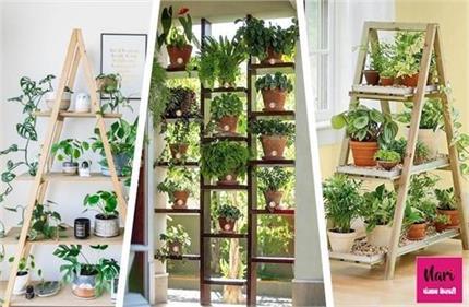 Plant Decor: लैडर प्लांट से करें घर की सजावट