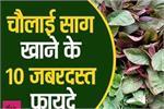 भूलकर भी ना उखाड़ें घर में उगा यह पौधा, सेहत के लिए औषधि सामान