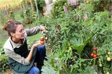 Kitchen Garden: आर्गेनिक सब्जियां खुद उगाएं, सर्दियों में...