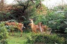 जानवरों के लिए वरदान बना कोरोना, अरावली से मिली कई लुप्त...