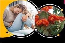 अनियमित पीरियड्स हो या बांझपन, महिलाओं की हर समस्या का हल...
