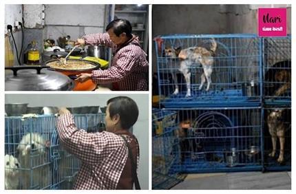 लोग पागल कहें, परवाह नहीं: जानवरों से इतना प्यार कि 1,300 डॉगी, 100...