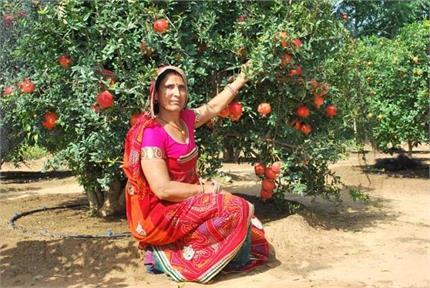 5वीं पास है खेती की 'मास्टरनी' संतोष देवी, सिंदूरी अनार से कर रही...