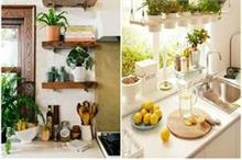 कम खर्च और खूबसूरत पौधों के साथ किचन को दें सुंदर लुक