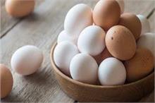 डाइट में जरूर शामिल करें अंडा, सेहत को मिलेंगे कई फायदे