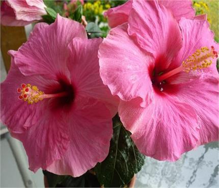 महिलाओं के लिए वरदान है यह फूल, एक बार जरूर आजमाएं