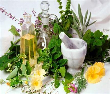 आयुर्वेद खास: किसी अमृत से कम नहीं ये 11 पौधे