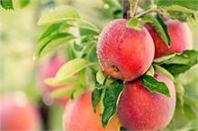 शरीर को कई बीमारियों से बचाता है रोज का यह 1 फल