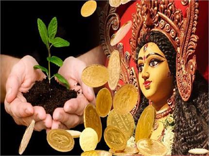 नवरात्रि दिनों में लगाएं यह पौधा, भूलकर भी न करें ये काम