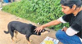 Feed Animals: इस लॉकडाउन में कहीं भूखे न मर जाए शहर के...