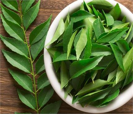 तेजी से वजन घटाएगी करी पत्ते की चाय, 6 बीमारियां भी रहेंगी दूर