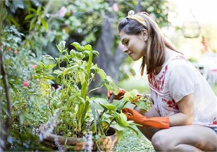 घर में नींबू और बैगन कैसे उगाएं, जानिए ऑर्गेनिक लिस्ट