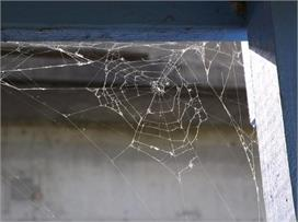 घर पर लगे मकड़ी के जाले को आज ही कर लें साफ वरना...
