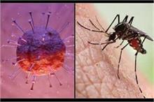 क्या मच्छर के काटने से फैल सकता है Corona? जानिए सच