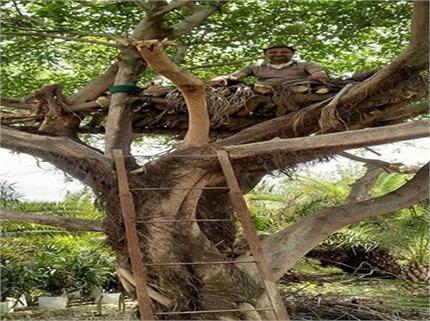 कोरोना का इतना खौफ कि आदमी ने पेड़ पर ही बना लिया आशियाना
