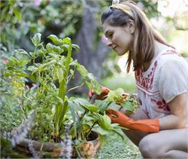 जहरीली हवा को शुद्ध करेंगे ये Air Purifier पौधें