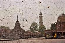 राजस्थान से दिल्ली की ओर बढ़ा टिड्डियों का आतंक, कई राज्यों...