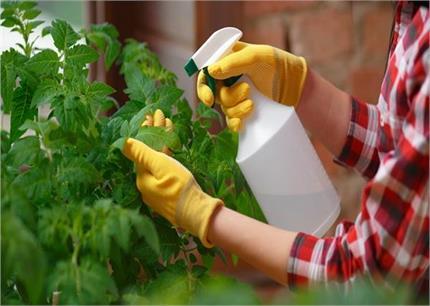 Homemade Insecticide से करें अपने पौधों की देखभाल