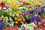 बंद किस्मत के दरवाजे खोलते है ये फूल, आपके लिए कौन-सा फूल है लकी?