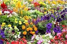 बंद किस्मत के दरवाजे खोलते है ये फूल, आपके लिए कौन-सा फूल...