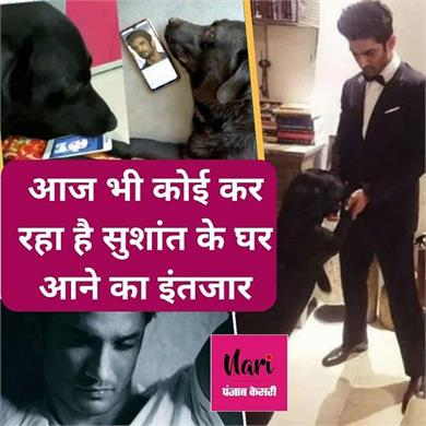 sushant singh rajput s dog video viral
