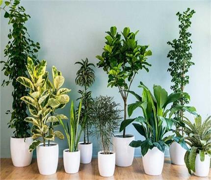 Vastu Tips: घर में कौन- सा पौधा लगाना होता है शुभ और अशुभ?