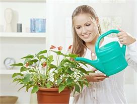 घर में लगा लें ये 10 पौधे, हवा को करते हैं शुद्ध