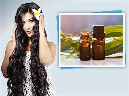 सफेद बालों का काला करेगा मेहंदी का तेल, मिलेंगे और भी फायदे